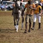 Aus vs Zimbabwe 087 - Copy