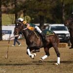 Aus vs Zimbabwe 125 - Copy